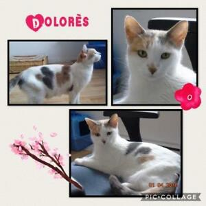 "Adult Female Cat - Domestic Short Hair: ""Dolorès"""