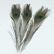 Wholesale Peacock Feathers
