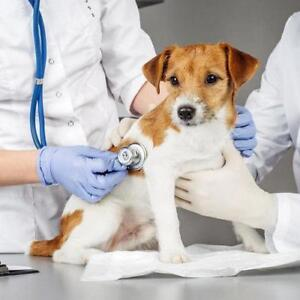 Affordable Veterinary Services - Special Offers!