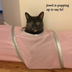 Jewel is one cool cat