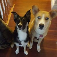 Pet Sitter Wanted - Looking for a dog walker that can be availab