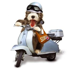 Bearded Collie dog on Scooter Mods and Rockers blank greetings card