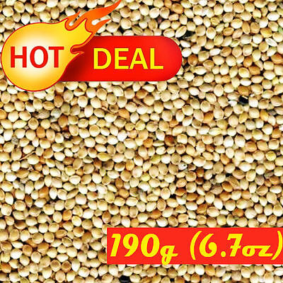 MILLET WHITE SEEDS 190g (6.7oz) NATURAL WHOLE NUTRITIUS BIRD FOOD MORNING PROSO