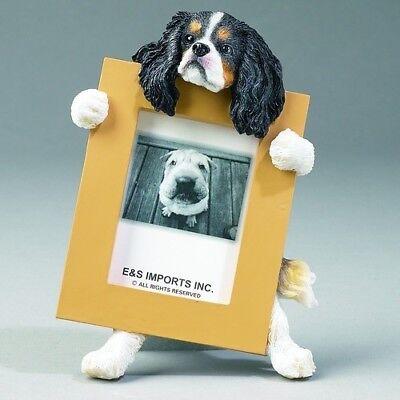 Tri Cavalier King Charles Spaniel - Cavalier King Charles Spaniel Tri Dog Picture Photo Frame