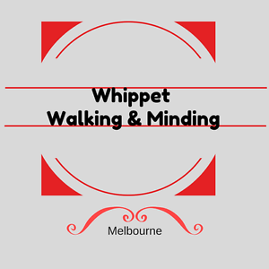 Whippet Walking and Minding Preston Darebin Area Preview