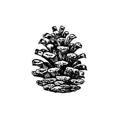 PINE CONE Small UNMOUNTED rubber stamp, winter holiday, Chri