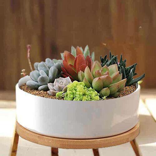 """6.25"""" White Ceramic Round Succulent Cactus flower planter po"""