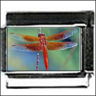 DRAGONFLY in color italian PHOTO 9mm charm for modular link style Bracelet Dragonfly Italian Charm Bracelet