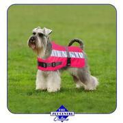 Hi Vis Dog Jacket