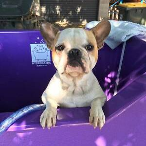 Tim - Express Mobile Dog Wash & Groom Largs Bay Port Adelaide Area Preview