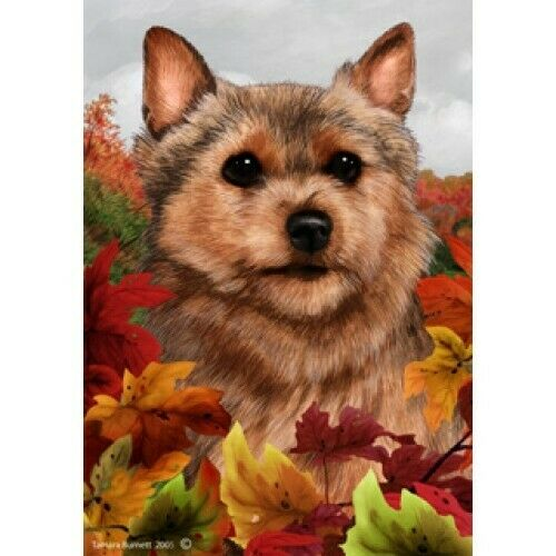 Fall House Flag - Norwich Terrier 13152