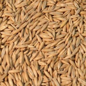 Oats for sale; bulk, bagged or Usac