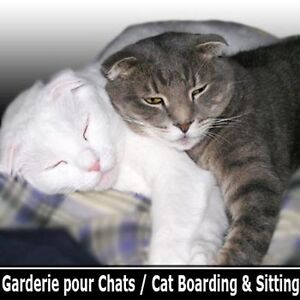 Cat Boarding Hotel - Hotel Pension Garderie pour Chat