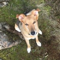 Looking for dog walker! - Pet Sitter Wanted