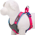 Blueberry Pet Padded Dog Harnesses