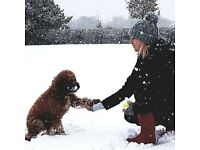 Paddy paws Spennymoor dog services - Dog walking, sitting, behaviour and training.