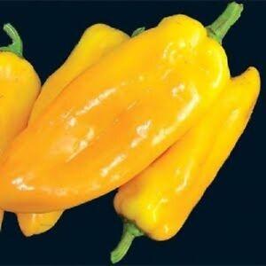Sweet-Pepper-Golden-Californian-25-seeds-Vegetables-Fruits