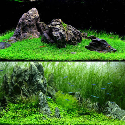 LIVE Aquarium Plant Seeds Glossostigma Aquatic Water Grass Foreground -