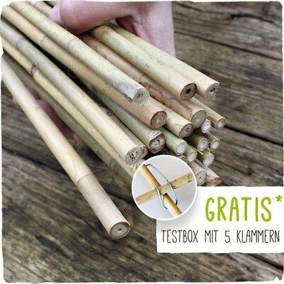 50 Bambusstäbe - Tonkinstäbe 120 cm / 10-12 mm + Zubehör zum Testen Zubehör