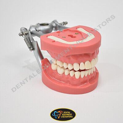 Typodont Kilgore D81sdp-200 28 Teeth Hard Tissue Dental School Study Model