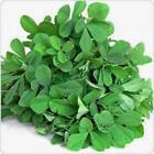 Dry Neutral Herb Seeds