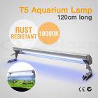 Marine Aquarium Bulbs/Lamps