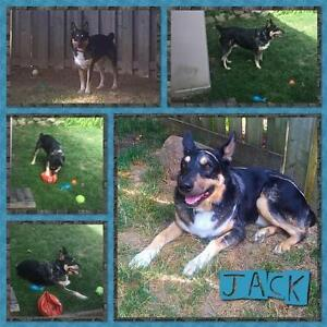 "Adult Male Dog: ""Jack"""