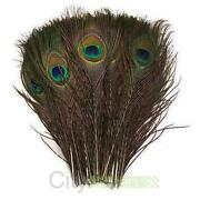 Real Peacock Feathers