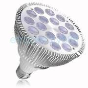 Par 36 Bulb