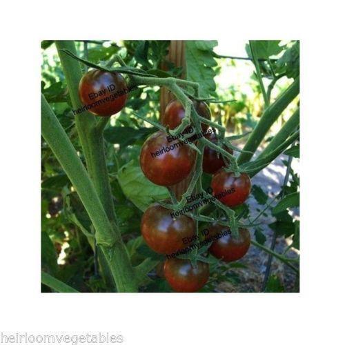 black cherry tomato seeds bulbs ebay. Black Bedroom Furniture Sets. Home Design Ideas