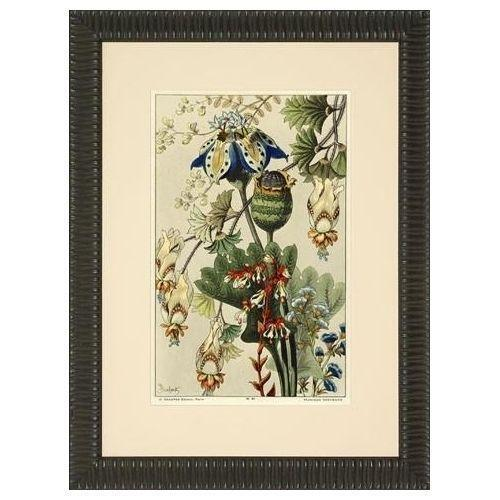 Framed vintage botanical prints for Where to buy framed art