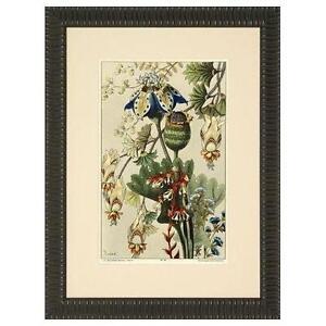 framed antique botanical prints