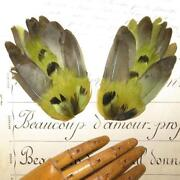 Antique Millinery Feathers