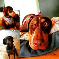 """Young Female Dog - Coonhound: """"Lucy"""""""