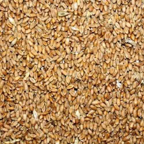 25 Kg Weizenkörner (1Kg/0,90EUR) Karpfen,Pferde,Wildvögel