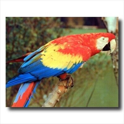 Tropical Macaw Parrot Bird Kid Wall Picture Art Print ()