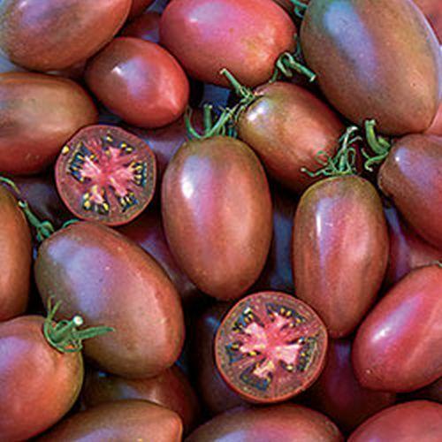 Фиолетовый томат сорт