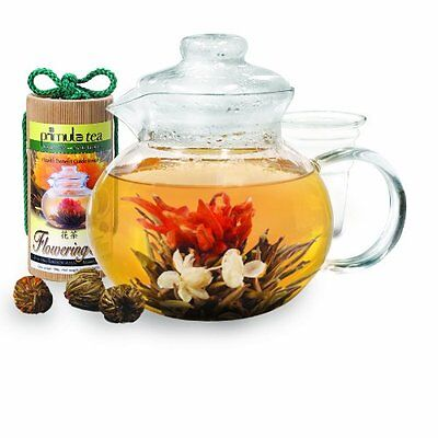 Primula 40-Ounce Glass Teapot with Infuser and Lid with 12 F