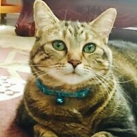 Pet Sitter Wanted - Looking for Cat Sitter in Milton
