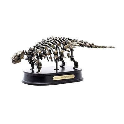 Saichania / Ankylosaurus Dinosaur Skeleton Model Replica 1:20 Scale DinoStoreus