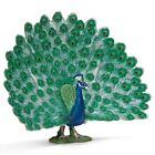 Peacock Collectibles