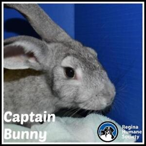"Adult Female Rabbit - Bunny Rabbit: ""Captain Bunny*"""