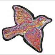 Widespread Panic CD