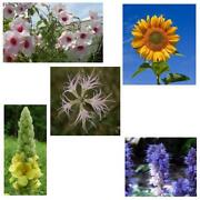 Seltene Blumen
