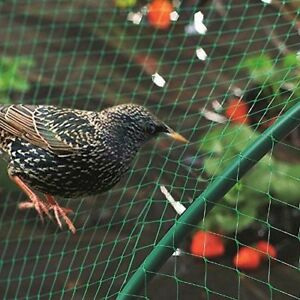 Anti Bird Plant Pond Green Nylon Garden Netting Net Fruit Veg Protection 4 X 10M