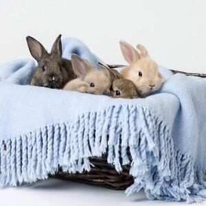 "Young Male Rabbit - Bunny Rabbit: ""Mini Egg & JuJub"""