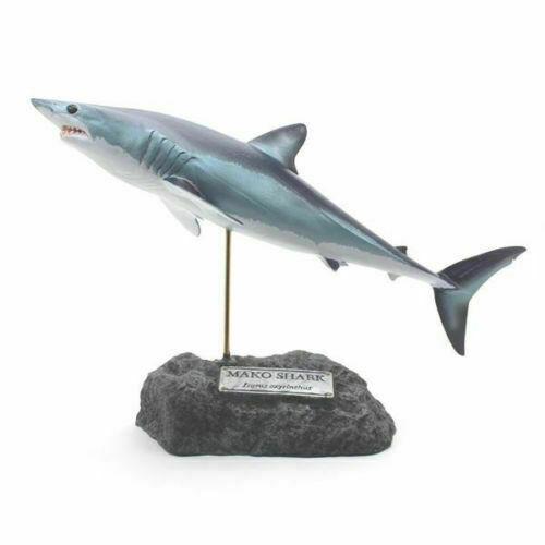 Kaiyoukoubou Shortfin mako shark Real figure Isurus oxyrinchus Fish carving NEW