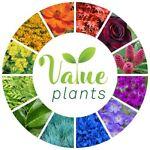 Value Plants