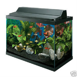 20 gallon fish tank ebay for Fish tanks for sale ebay