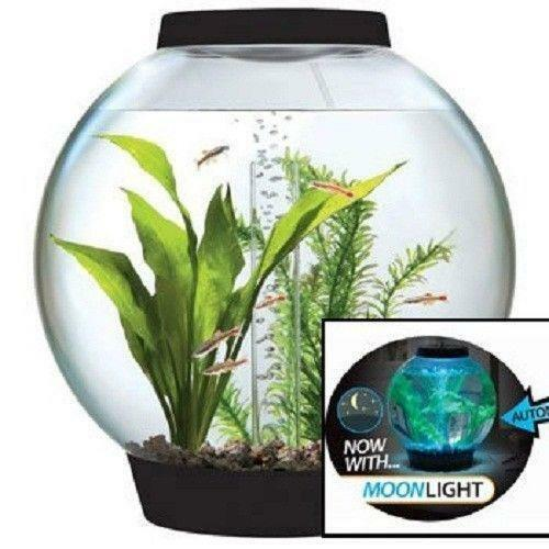 4 Gallon Fish Tank Ebay